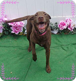 Labrador Retriever Mix Dog for adoption in Marietta, Georgia - MILEY