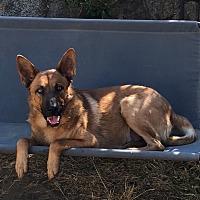 Adopt A Pet :: Cesar - Santa Monica, CA