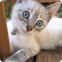 Adopt A Pet :: TwixL - North Highlands, CA