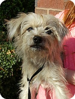 Terrier (Unknown Type, Medium) Mix Dog for adoption in Mount Pleasant, South Carolina - Widget
