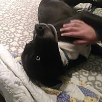 Adopt A Pet :: Edge - Russellville, KY