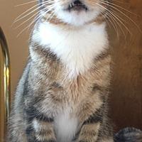Adopt A Pet :: Alexander - Pasadena, CA