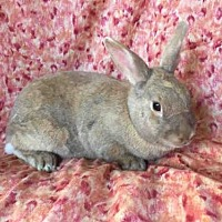 Cinnamon Mix for adoption in Goleta, California - HOLLING