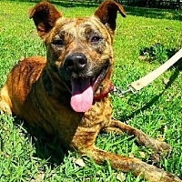 Terrier (Unknown Type, Medium) Mix Dog for adoption in Huntington, New York - Leroy - N