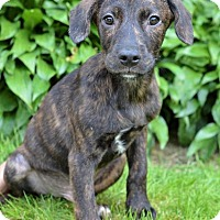 Adopt A Pet :: Jake - Danbury, CT