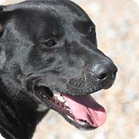 Adopt A Pet :: Riley Tripod - Hooksett, NH