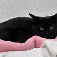 Adopt A Pet :: Opal - Twinsburg, OH