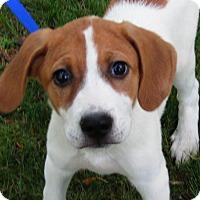 Adopt A Pet :: Jax - Allentown, PA