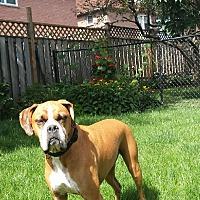 Adopt A Pet :: Jaxon - Caledon, ON