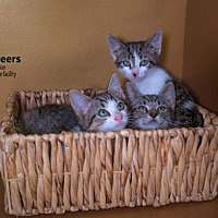 Adopt A Pet :: 3 Musketeers - Brockton, MA