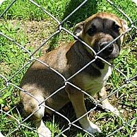 Adopt A Pet :: Hazel - Bel Air, MD