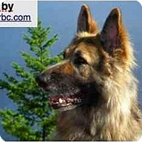 Adopt A Pet :: Darby - BC Wide, BC