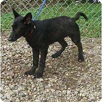 Adopt A Pet :: Ausra - Toronto/Etobicoke/GTA, ON