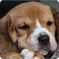 Adopt A Pet :: Lizzy Jane - Portland, OR