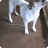 Adopt A Pet :: Valentine - Childress, TX