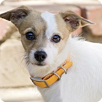 Adopt A Pet :: Winston - Los Angeles, CA