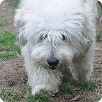 Adopt A Pet :: Oliver - Tumwater, WA