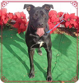 Labrador Retriever Mix Dog for adoption in Marietta, Georgia - NIKKI