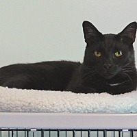 Adopt A Pet :: Wonka - Victor, NY