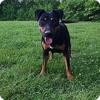 Adopt A Pet :: Tasha - Ashburn, VA