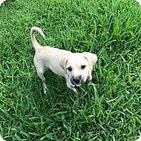 Adopt A Pet :: Kimmy - ROSENBERG, TX