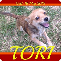 Adopt A Pet :: TORI - White River Junction, VT