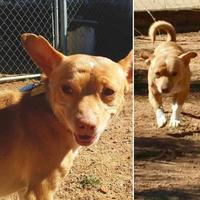 Adopt A Pet :: Finn - Las Cruces, NM