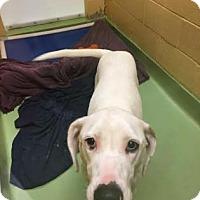 Adopt A Pet :: Tesla - Columbia, SC