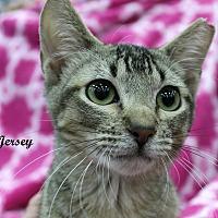 Adopt A Pet :: Jersey - Wichita Falls, TX