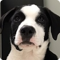 Adopt A Pet :: XANDER - Pine Grove, PA