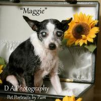 Adopt A Pet :: Stray Hold 282 - Fond du Lac, WI