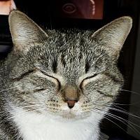 Adopt A Pet :: Tina - Cincinnati, OH