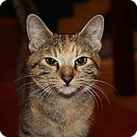 Adopt A Pet :: Allie (LE) - Little Falls, NJ