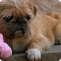 Adopt A Pet :: ROSCOE - ADOPTION PENDING - Los Angeles, CA