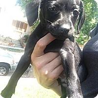 Adopt A Pet :: JETT - Inglewood, CA