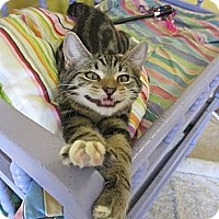 Adopt A Pet :: Sage - Mobile, AL