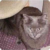 Adopt A Pet :: Ariety - Quincy, MA