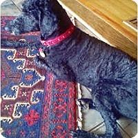 Adopt A Pet :: TN - Cosby - Houston, TX
