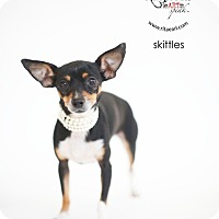 Adopt A Pet :: Skittles - Los Angeles, CA