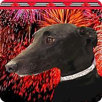 Adopt A Pet :: Wrigley - Spencerville, MD