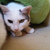 Adopt A Pet :: Glenda - Chula Vista, CA