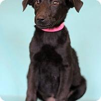 Adopt A Pet :: Carly - Waldorf, MD