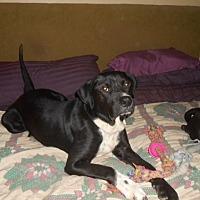 Adopt A Pet :: Charles - North Jackson, OH