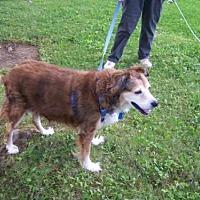 Adopt A Pet :: Belle - Doylestown, PA