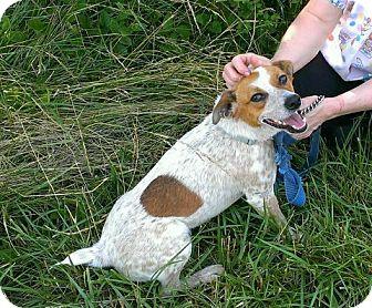 Terrier (Unknown Type, Medium) Mix Dog for adoption in Plainfield, Illinois - Jax