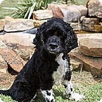 Adopt A Pet :: Jake - Sugarland, TX