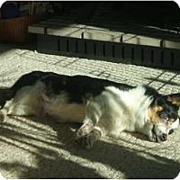 Adopt A Pet :: Fern - Alliance, NE