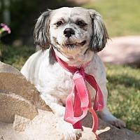 Adopt A Pet :: Bebe - Sherman Oaks, CA