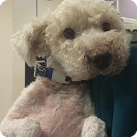 Adopt A Pet :: SANDLER - Higley, AZ