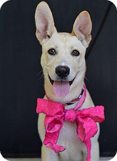 Labrador Retriever/Terrier (Unknown Type, Medium) Mix Dog for adoption in Baton Rouge, Louisiana - Sandy